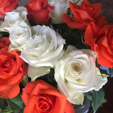 Is Gardening Always A Bed of Roses?